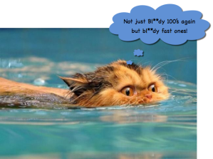 Swimming Cat